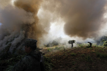 Soldiers carry bundles of marijuana towards a bonfire for incineration during the destruction of a plantation in Amata