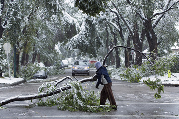 A local area resident helps moves tree limbs that fell and blocked roads due to the weight of the heavy snow during a summer snow storm in Calgary.