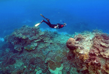 """A man snorkels in an area called the """"Coral Gardens"""" near Lady Elliot Island, on the Great Barrier Reef"""