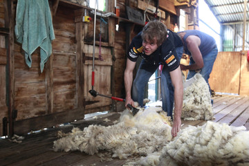 Red Bull F1 driver Sebastian Vettel of Germany shears a sheep during a media opportunity at a farm near Melbourne