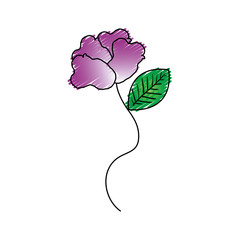 beautiful rose decoration icon vector illustration design
