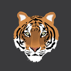 Vector illustration of Tiger Head on Gray Background