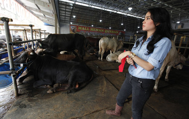 Salesgirl dressed as a cowgirl waits for clients in a cattle showroom in Depok