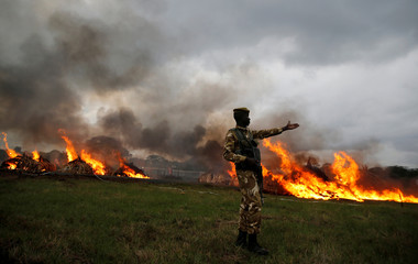A Kenya Wildlife Services ranger guards the burning of an estimated 105 tonnes of Elephant tusks confiscated ivory from smugglers and poachers at the Nairobi National Park near Nairobi, Kenya