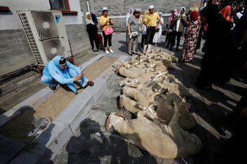 A woman takes pictures of the goats prepared for sacrifice during Eid al-Adha festival at Niujie mosque in Beijing