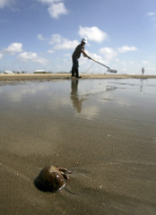 A hermit crab crawls through the sand as a worker tries to clean up oil along the beach in Grand Isle