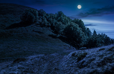 path through forest on hillside meadow at night