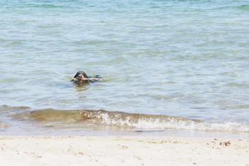 Dog on the beach, summer beach