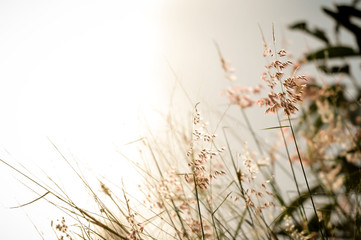 Flowers grass with beautiful light blurred background vintage.