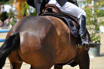 Ungehorsam, das Pferd verweigert den Hüdensprung