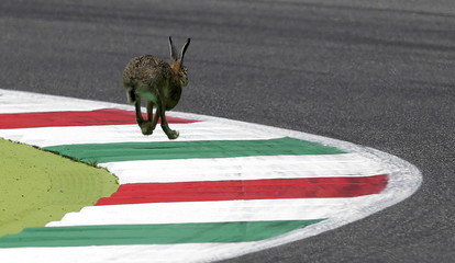A wild rabbit runs on the track during the qualifying session for the Italian Grand Prix at the Mugello circuit