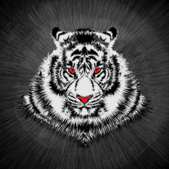 White tiger head / Vector illustration of white tiger