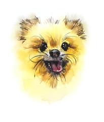 German Spitz. Portrait small dog. Watercolor hand drawn illustration