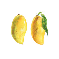 Hand drawn fresh yellow mango. Watercolor isolated thai tropical fruits set. Painting vegetarian illustration on white background