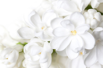 White lilac flowers blossom wallpaper . Floral motif background.