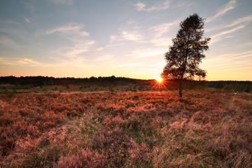 purple sunset over heather hills