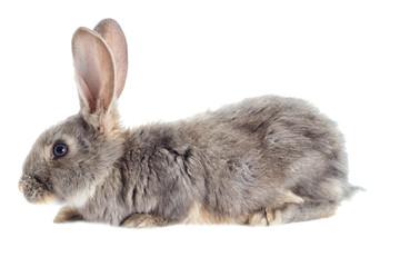 Funny rabbit watching
