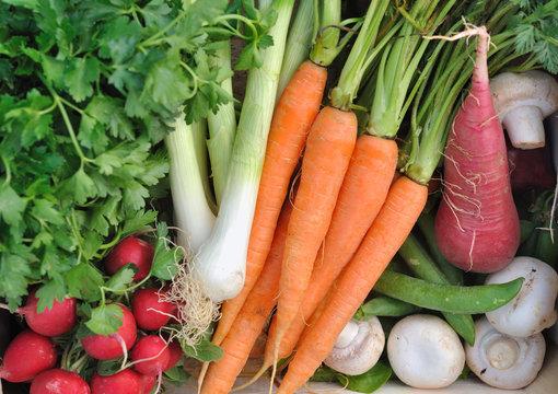 légumes crus, carottes, radis, oignons et champignons,