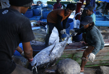 Worker drag tuna fish at Muara Baru port in Jakarta