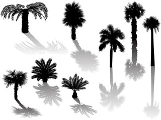 eight palm black silhouettes with shadows