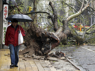 A man walks along a street during a storm as a fallen tree is seen in the background during a heavy wind storm in Montevideo