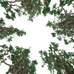 Bäume - Untersicht - Freisteller