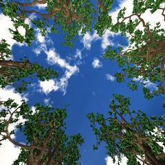 Bäume - Untersicht