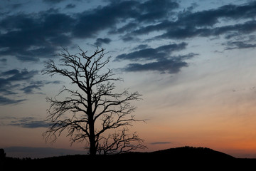 Meditative nature concept. Bare tree on background of cloudy dawn. Sad dark landscape.