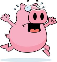 Pig Panic