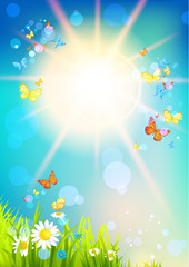 Bright sunshine and butterfly