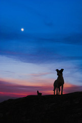 Dog silhouette at full moon in Brazil