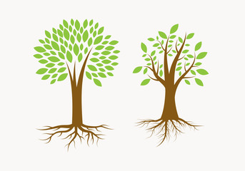 Tree With Roots. The Growth Illustration. Natural Trees.