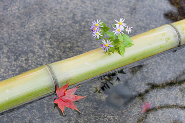Bamboo, flowers, and red maple leaf in a chozubachi or water basin used to rinse the hands in Japanese temples, shrines, and gardens.