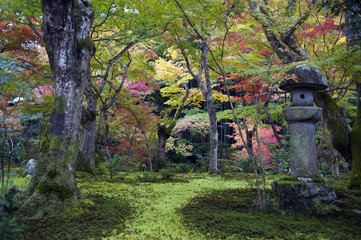 Japanese maple tree during autumn in a garden in Kyoto, Japan