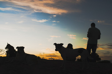 Man and dogs silhouettes at sunrise in Brazil