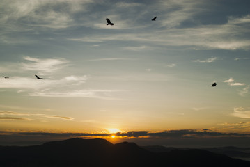 Birds silhouettes at sunrise in Brazil