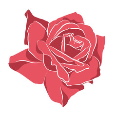 Beautiful hand drawn stencil rose, isolated on white background. Botanical silhouette of flower