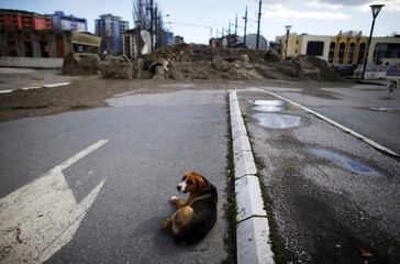 A dog lies near the barricade set up on the main bridge in the ethnically divided town of Mitrovica