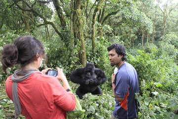 Tourists take pictures of a mountain gorilla in Virunga national park in the Democratic Republic of Congo, near the border town of Bunagana
