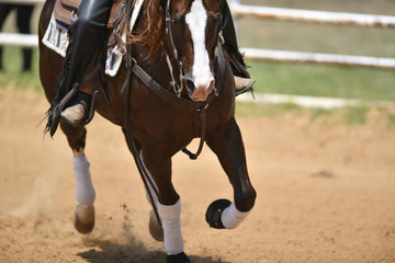 A front view of a rider gallops on horseback on the sandy field