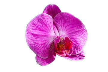 Orchid flower isolated on white background.