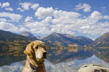 Twin Lakes Autumn Reflection and Golden Retriever Puppy