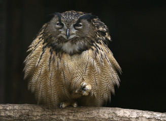 An eagle owl sits on a branch in its enclosure at the Grugapark in Essen