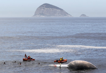 Rescue workers try to tow a dead Bryde's whale, as identified by the Aqualung Institute, near Sao Conrado beach in Rio de Janeiro