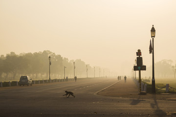 Fototapeten Delhi monkey in wide city