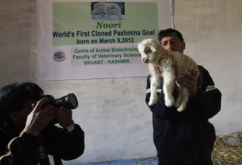 A photographer take pictures of Noori cloned Pashmina Goat at SKUAST in Shuhama