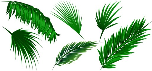 Set of coconut leaves on white background