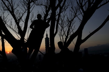 Man climbs a tree at sunset with Taiwan's landmark building Taipei 101 seen in the background, in Taipei