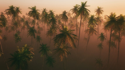 High angle view of palm tree forest in morning mist.