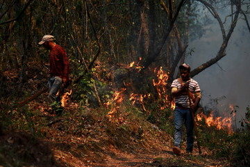 Environment ministry staff work to put out a forest fire near Constanza city, northwest of Santo Domingo